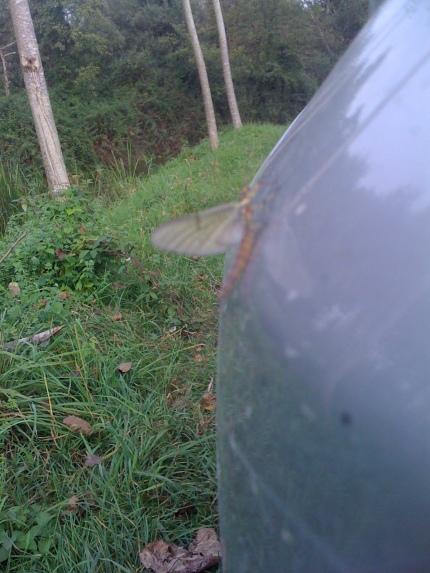Effimera - Fiume Ghebo - Lonca di Codroipo - Settembre 2013