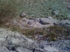 Torrente Resia - Tigo di Resiutta - Marzo 2014