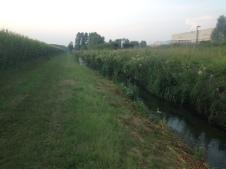 Roggia Barbariga - Rivignano - Luglio 2015