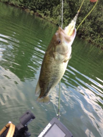 Il secondo Bass della giornata