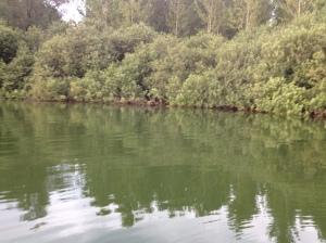 Lago di Ragogna - luglio 2015